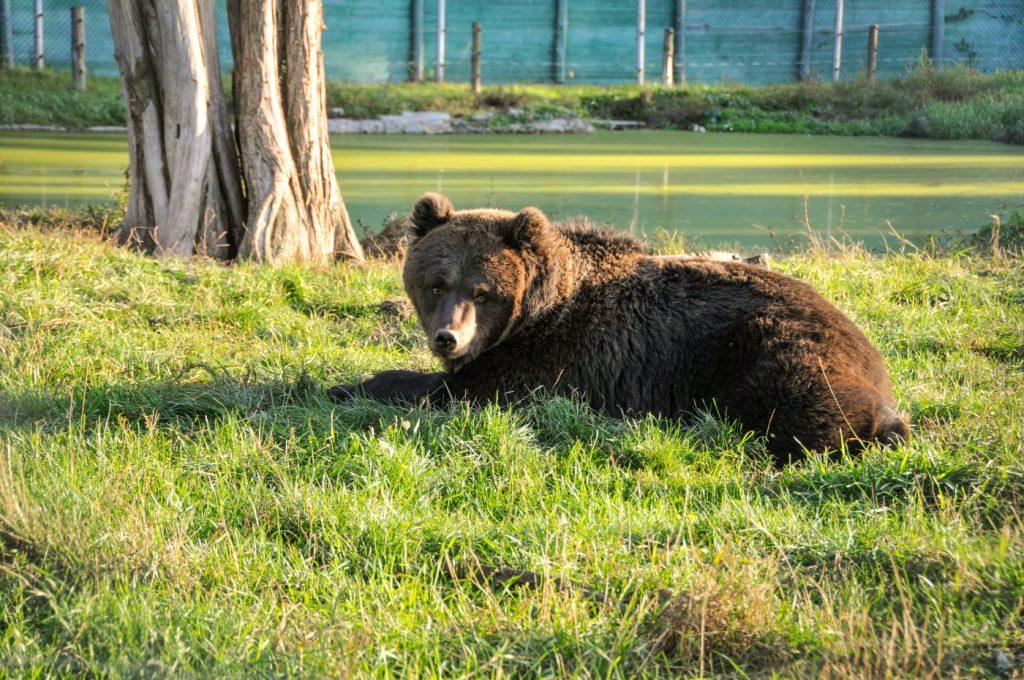 Притулок для ведмедів «Біла скеля» залишиться в Березівці, фото-1
