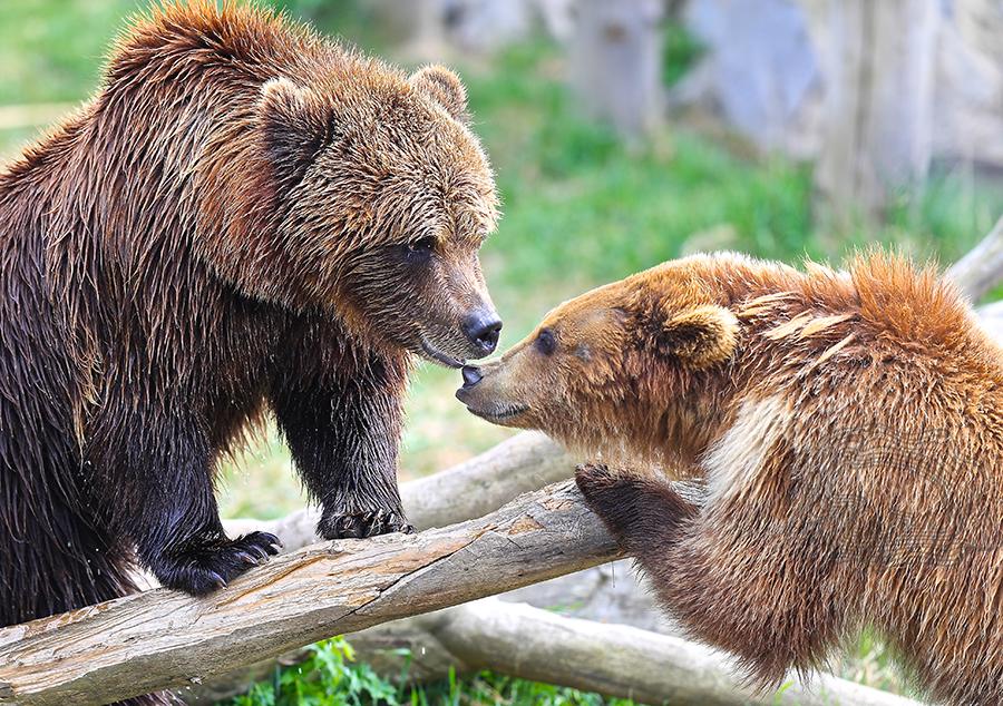 Lovely_bears